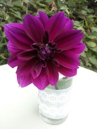My beautiful super-sized Purple Haze dahlia. The flower is a whopper – as big as an outstretched hand.