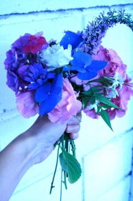 The flowers I picked this morning are a lovely combo of pinks and blues. This posy consists of a pink bush rose called 'Celebration', pink and blue hydrangeas, buddleja (beautiful purple spires usually covered in butterflies), jasmine (strong, beautiful scent) and lychnis coronaria (a pretty deep fuchsia flower that grows in drifts of brilliant colour).